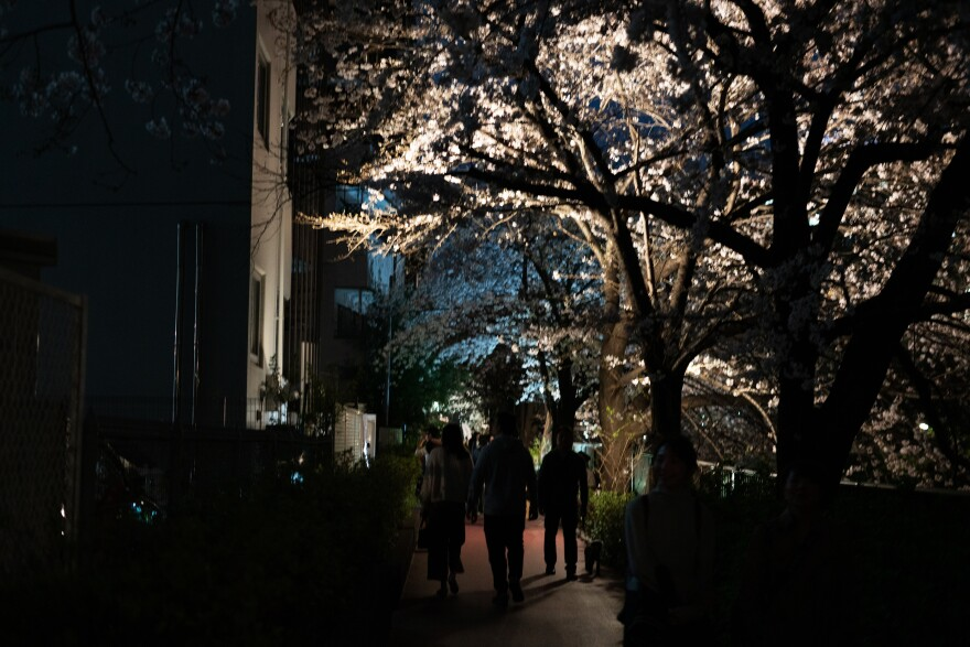 Underneath the cherry blossom trees there's a feeling of excitement and normalcy.