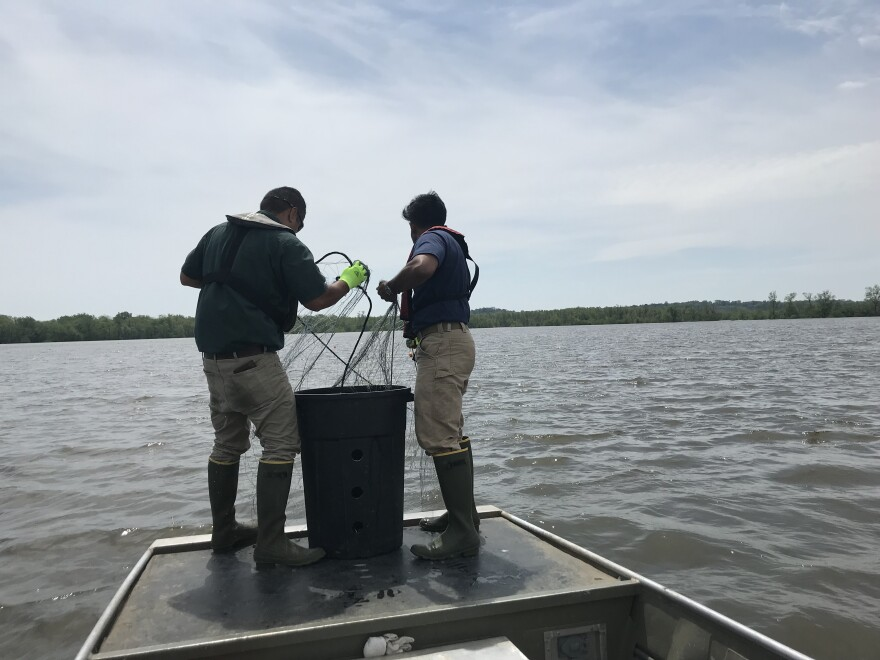 Salvador Mondragon and his research assistant, Sindupa DeSilva, pulled up nets from a private lake in Cape Girardeau they were using to capture alligator gar in May 2019.