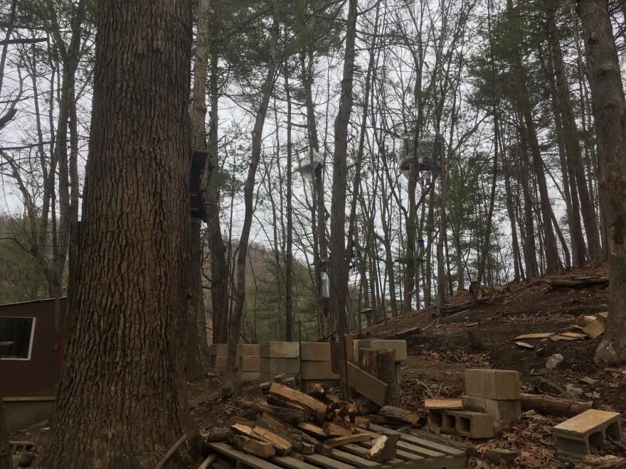 Treesit 2