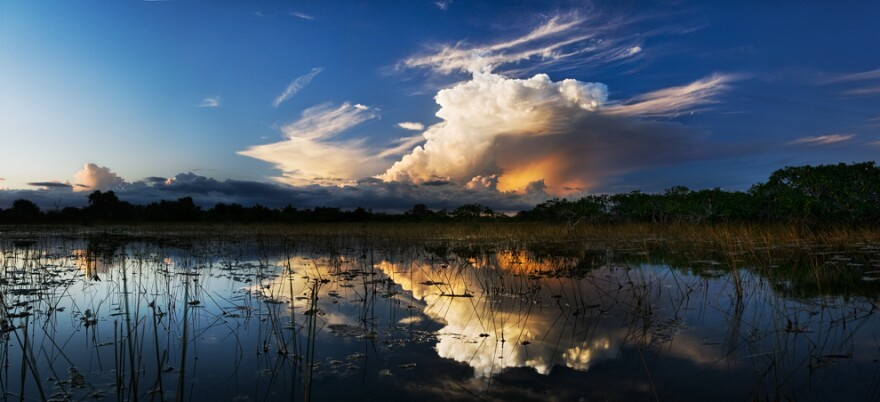 Reflection of the clouds in swamp water of the Everglades.