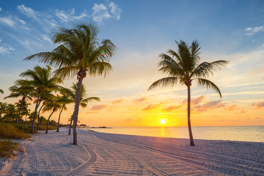 Wideview of a beach with many palm trees on it. The sun rises above the water.