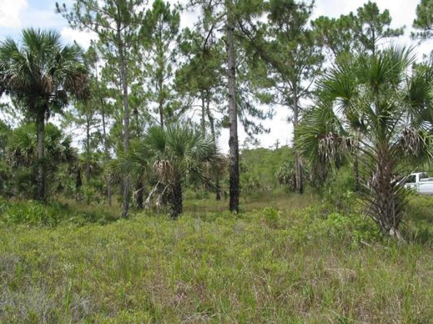 Federal officials are giving the state of Florida $40 Million to help restore timber in the Caloosahatchee Forest.