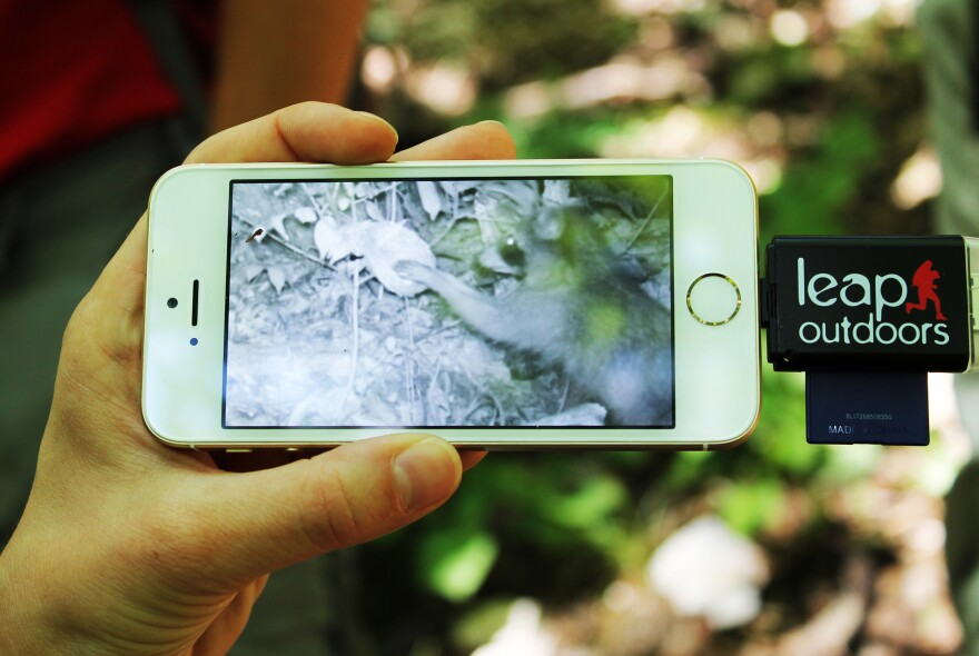 The wildlife cameras take a series of five photos each time motion is detected near the experimental bird nests. Using a memory card reader, the students are able to check the photos in the field on a cell phone.