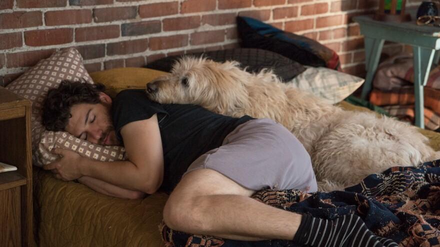 Dax (Adam Pally) and friend/comforter in <em>Dog Days</em>.