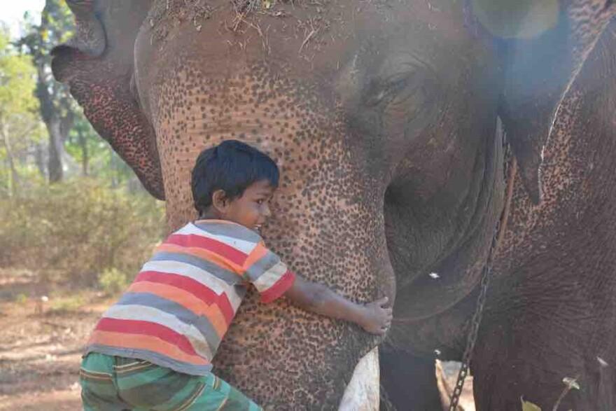 080817_cj_young_mohout_boy_elephants_in_the_coffee.jpg