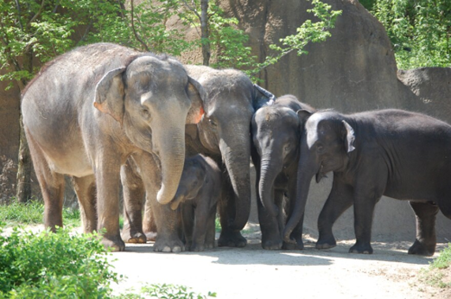 Zoo backers want to build a breeding facility and outdoor attraction offering a safari-like experience in Spanish Lake.