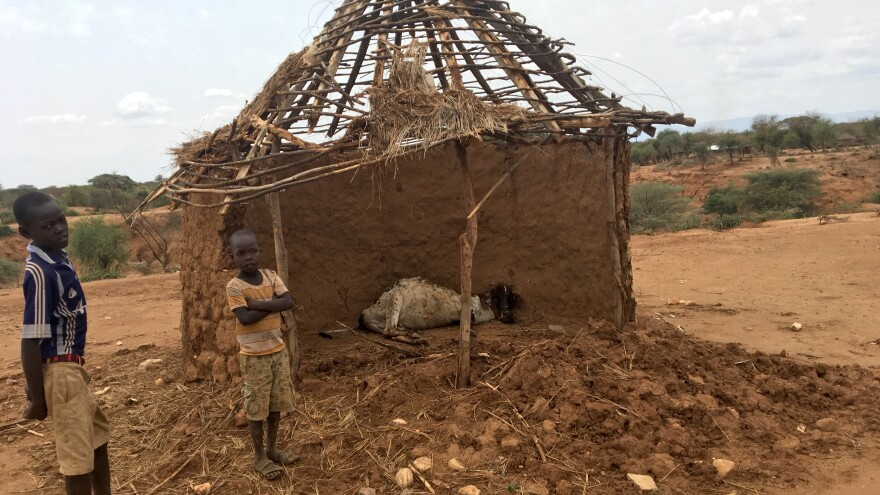 The cows in West Pokot County, Kenya, get so hungry they feast on thatched roofs. That makes them sick and many of them end up dead.