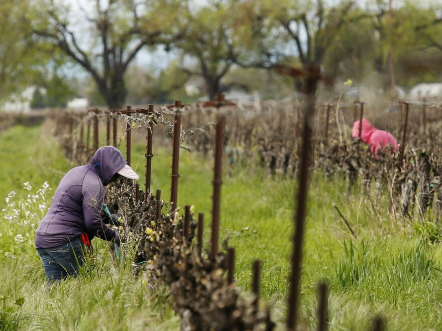 Work continues at a winery in Clarksburg, Calif., last month. Farms are operating as essential businesses amid the coronavirus pandemic.