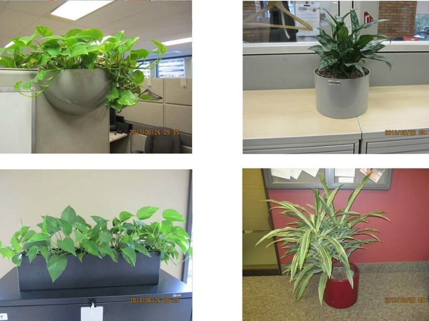 """Plants for auction on <a href=""""http://gcsurplus.ca/mn-eng.cfm"""">GCSurplus</a>, the Canadian Government's site for the sale of surplus goods. Plants from the House of Commons may soon join them."""