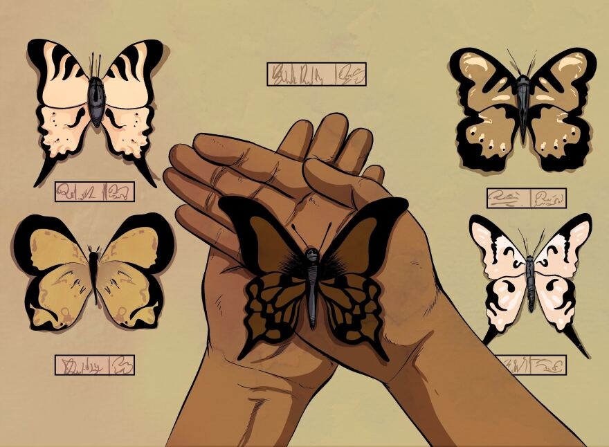a pair of hands holding a brown butterfly, surrounded by other butterflies of varying colors