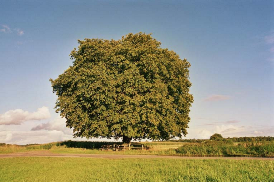 The nearly 200-year-old chestnut tree in Dusseldorf, Germany, which had its own mailbox and got thousands of letters.