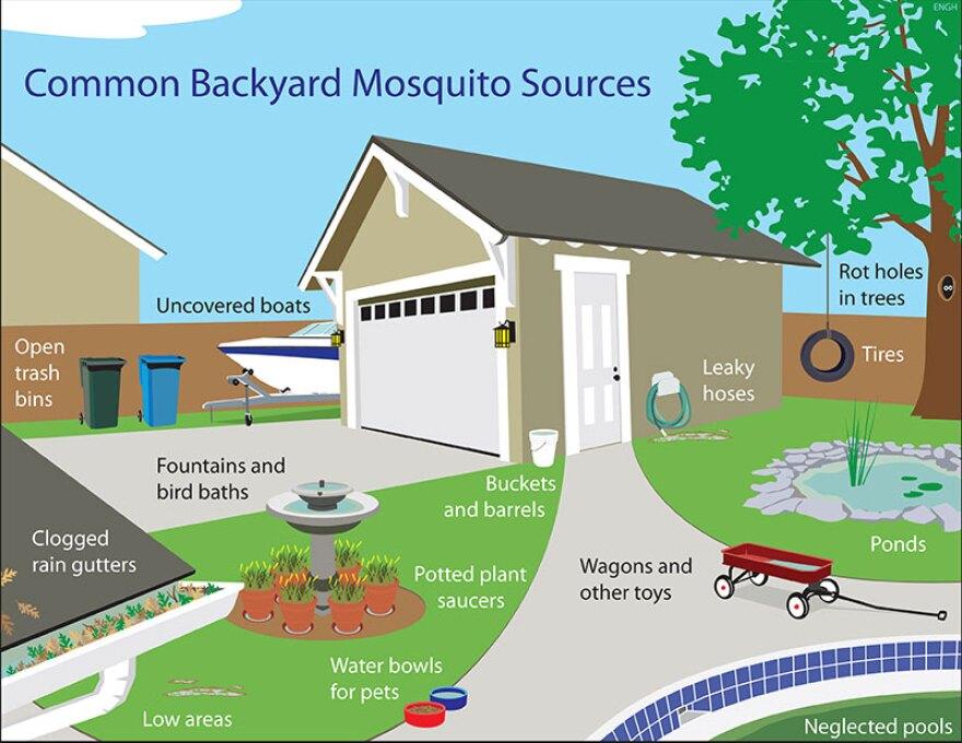MosquitoHouse800x618.jpg