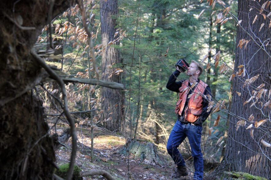 University of Vermont forest ecologist Bill Keeton uses a laser rangefinder to measure the height of a tree in UVM's Jericho Research Forest. (Kathleen Masterson/VPR)