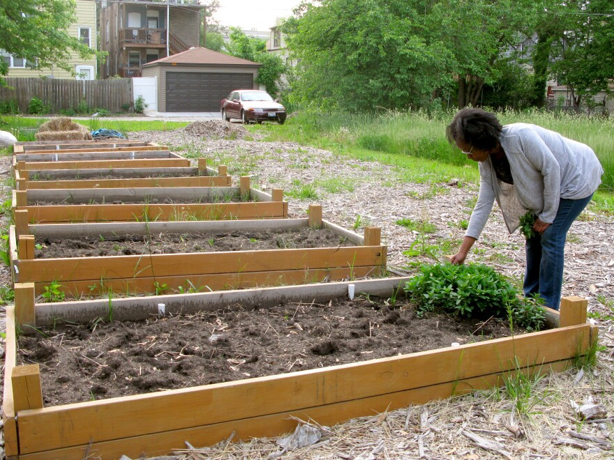 "Sonya Harper picks peppermint she's been growing in a vacant lot on her block in Chicago. With her neighbors, she's hoping to acquire two adjacent overgrown lots under the city's ""Large Lot Program"" so they can expand the community garden."