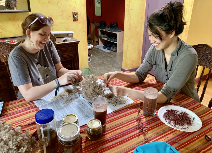 Antioch College students Sarah Mills and Mari Smith processing seed at Beth Bridgeman's house