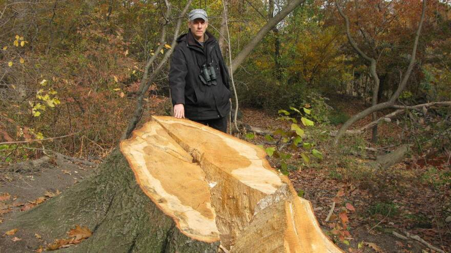 Ken Chaya created a map that charts every single tree in New York's Central Park. He stands next to one of the thousands of trees uprooted by Sandy.