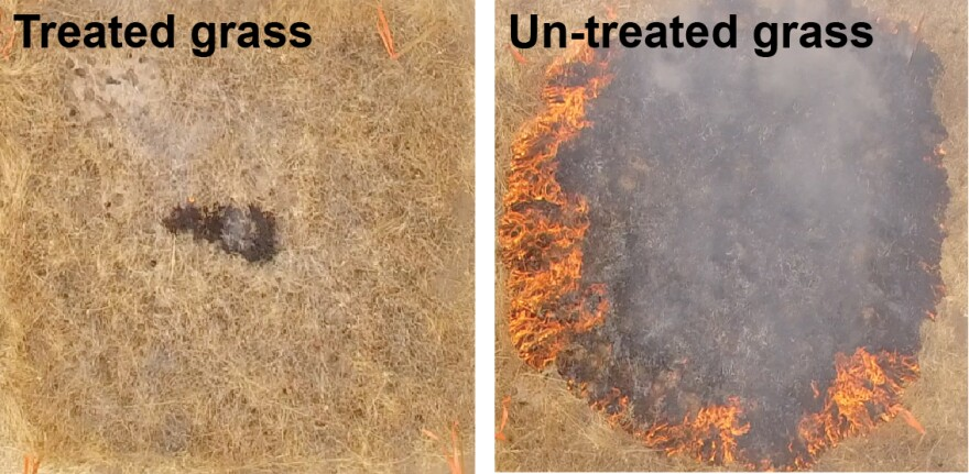The researchers tested their fire-retarding hydrogel on a grassy roadside near San Luis Obispo, Calif. In one minute, untreated plots burned almost entirely while treated grass remained mostly intact. ignition.