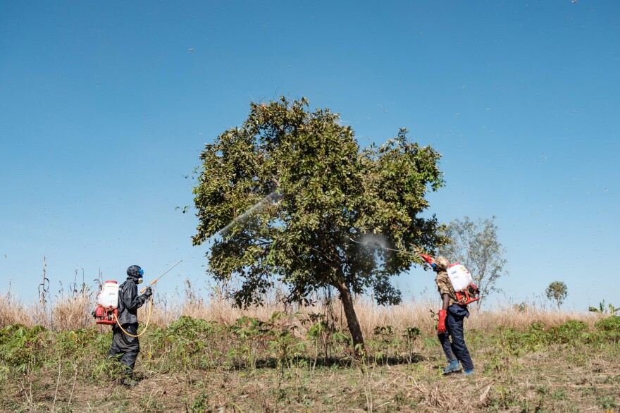 Ugandan soldiers spray trees in an effort to kill locusts.