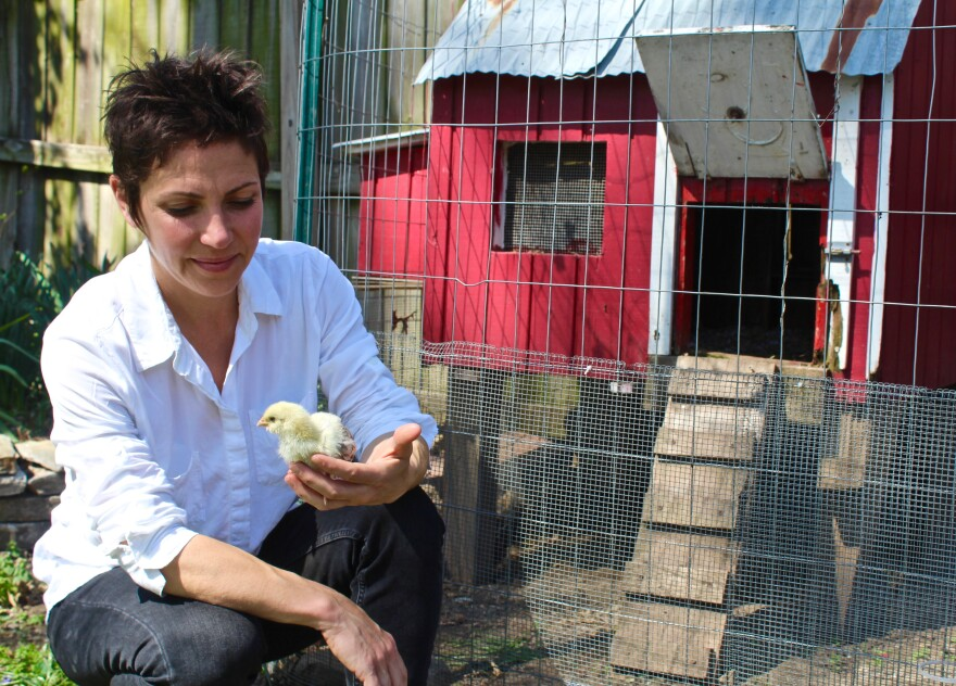 St. Louis alderwoman Cara Spencer with a chick that will live in her backyard coop.