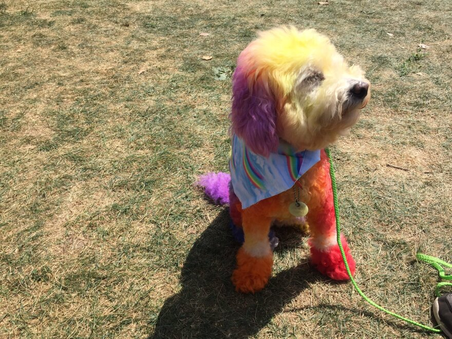 photo of Pride Fest dog