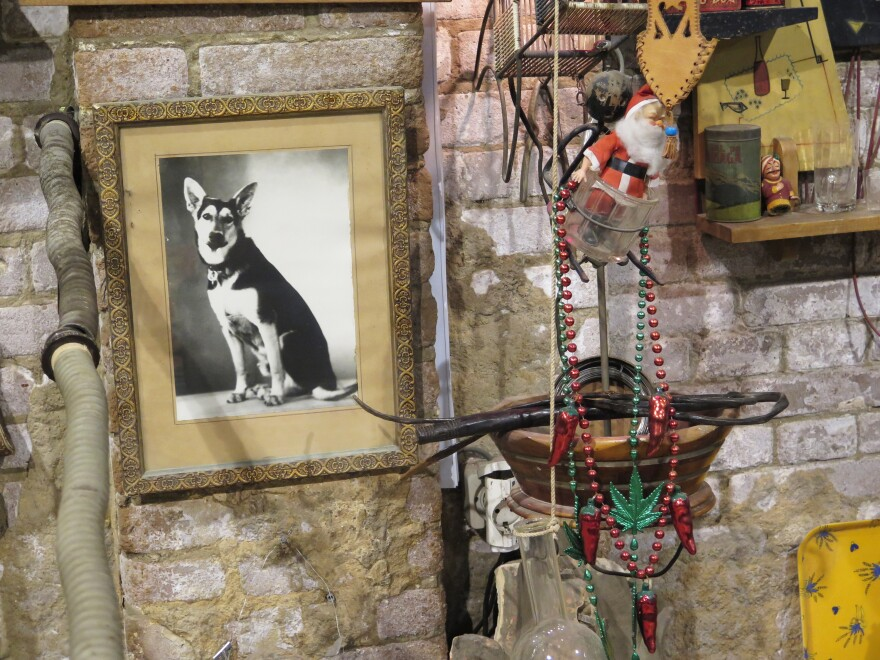 A formal studio portrait of a German Shepherd, along with 13 years' worth of dog licenses from an elderly Egyptian woman's collection, made up a small part of Naguib's gallery exhibit.