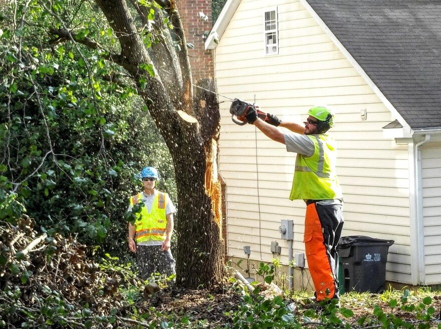 A city worker cuts down a tree on Culloden More Court off South Tryon Street.