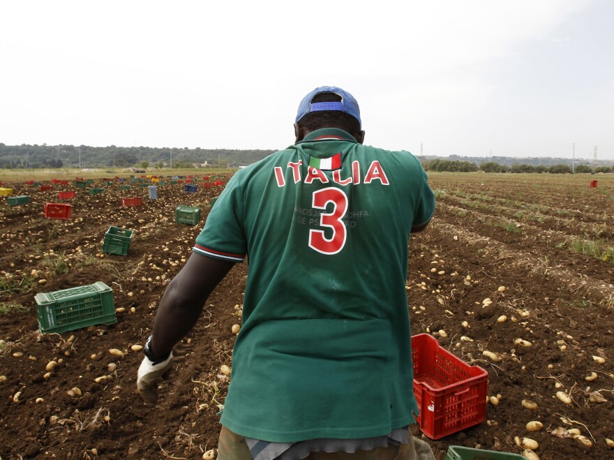 A migrant pauses as he picks potatoes in Siracusa, Sicily, Italy, in 2015.