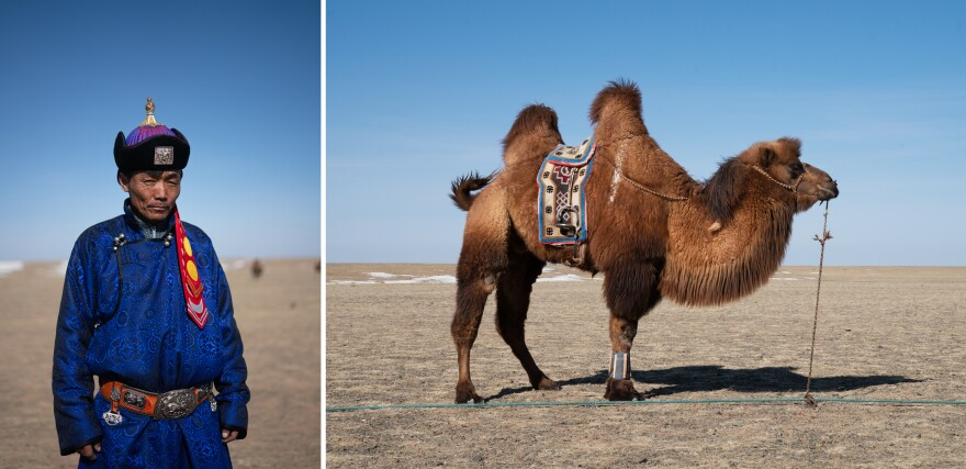 Byambasaikhan Sanjid, 45, is a local camel trainer. A camel stands tethered at the edge of the festival grounds, his ankles wrapped for polo.