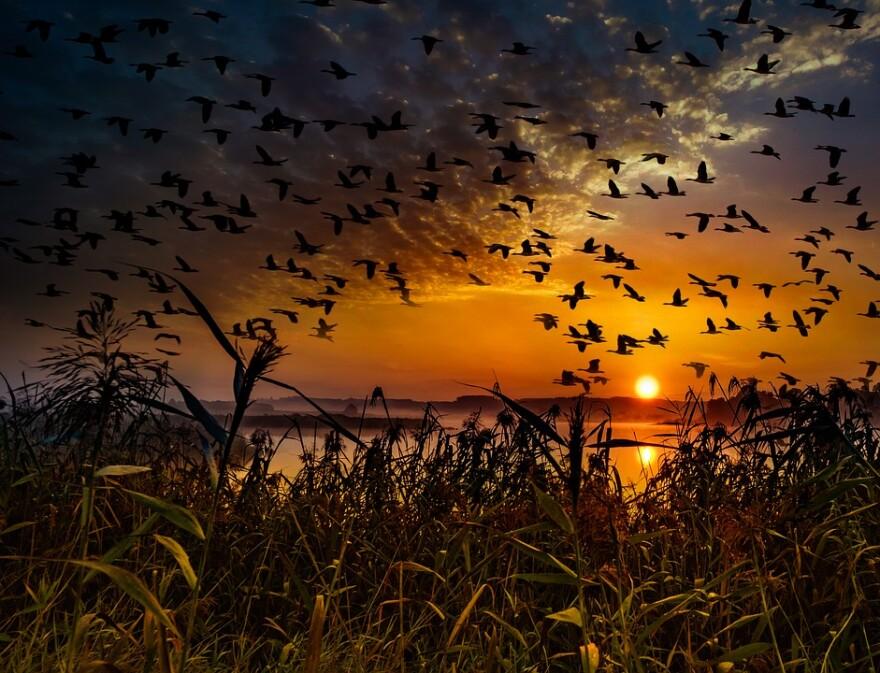 birds_migratory_at_sunset.jpg