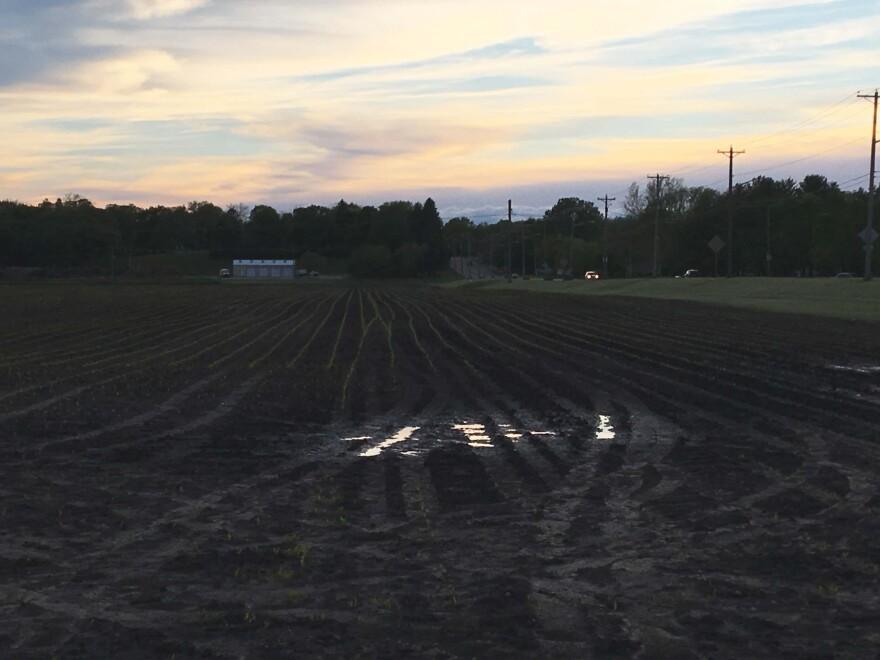 05-2019-am-wetfield.JPG