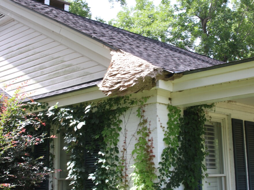 "A ""super nest"" was located outside an Alabama home earlier this month. Experts recommend hiring a professional to help remove these dangerous colonies."