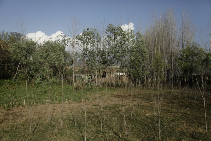 """Trees and orchards dot the road to Imam Dherai, once the headquarters of Taliban rule in the Swat Valley. Residents say the Taliban emerged in Imam Dherai in 2004, when a local charismatic preacher ran a pirate radio station from his home. He promised an Islamic Utopia in the Swat Valley. Residents say he was wildly popular, and was soon nicknamed """"Mullah Radio."""""""