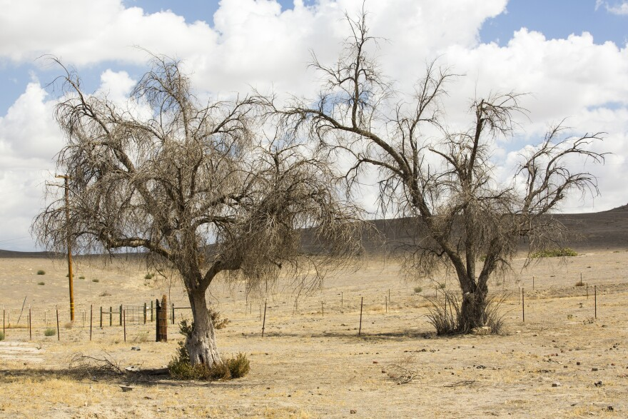 As the climate warms, drought is killing large numbers of trees in California. Scientists are looking to the past to try to understand how the ecosystems of today may be changing.