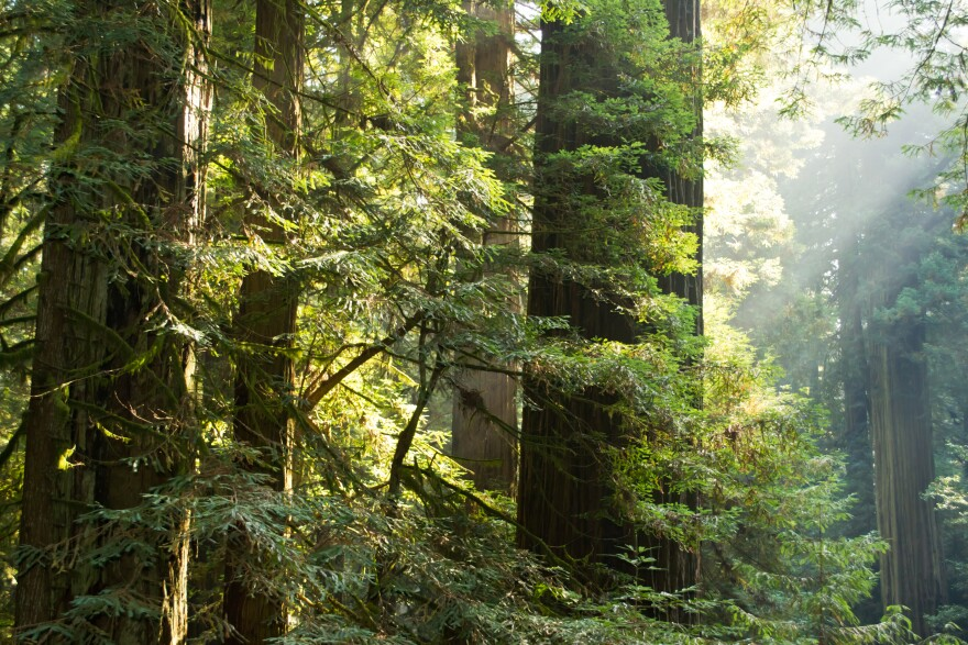 forest_trees_pretty_from_american_forest.jpg