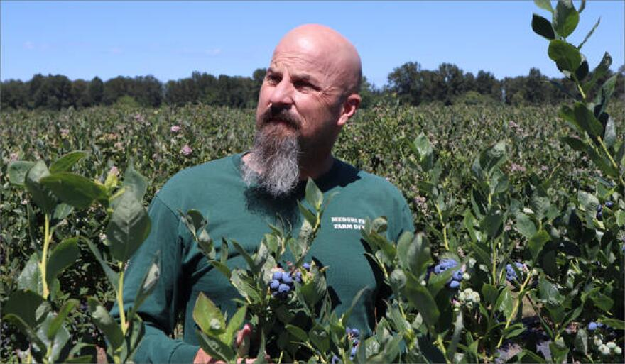 Orchard manager Justin Meduri is thrilled with the results of the laser system protecting his crop.