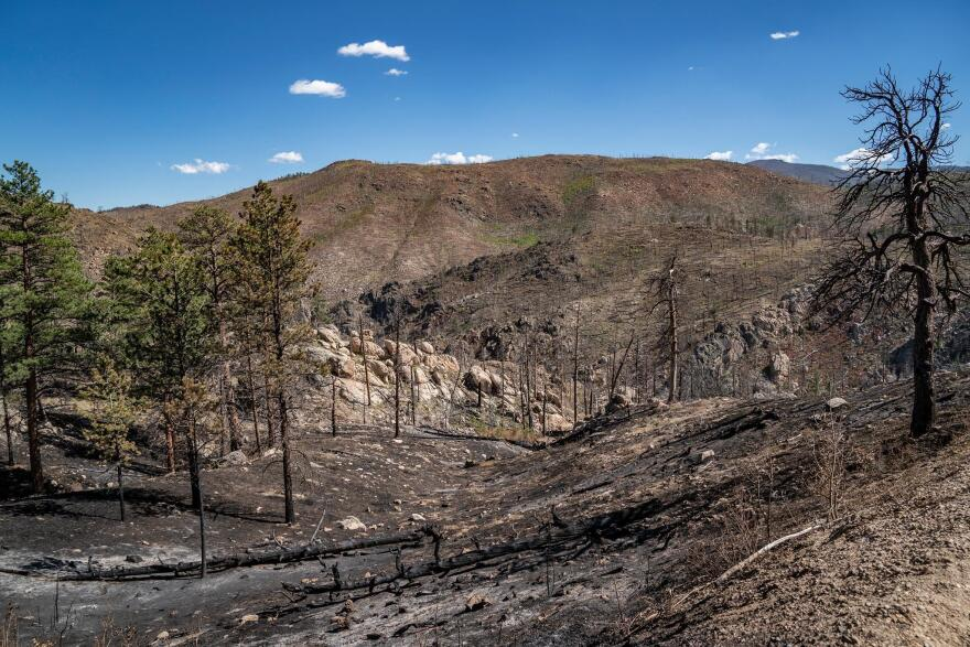 The Poudre River's watershed has now experienced two large-scale wildfires in the last decade.