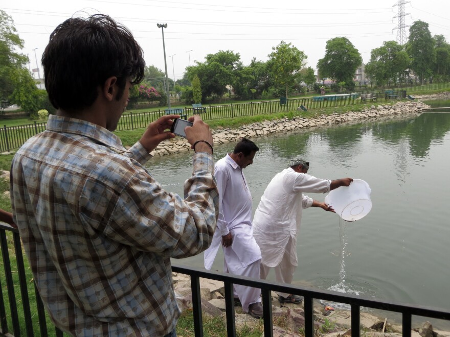 Workers drop tilapia fish into a small pond at a neighborhood park, as an inspector enters the activity into the Clean Lahore app. The fish eat the larvae of mosquitoes that spread dengue fever.