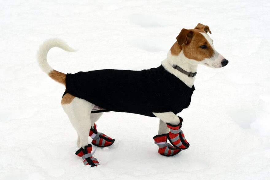 Pets are often suited up with protection from the cold.