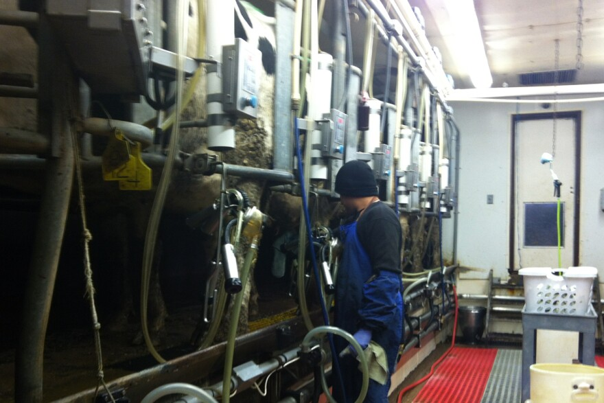 DairyWorker.jpg