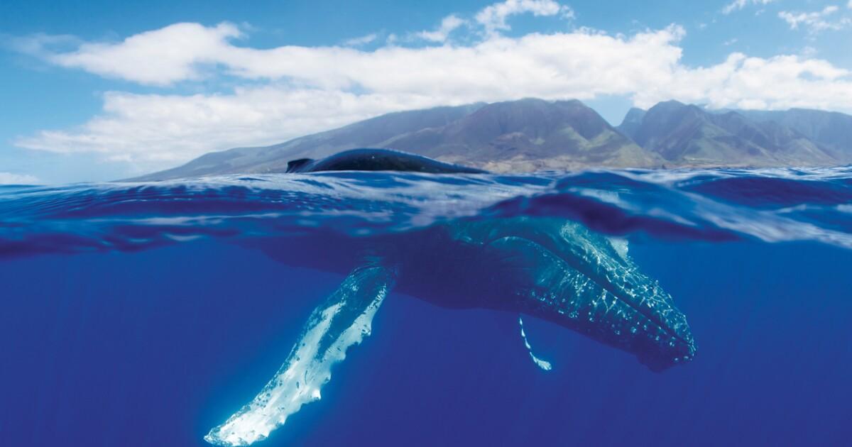 Maui opens educational exhibit for ocean life