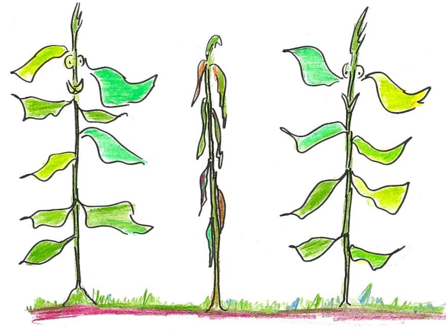 8. Three plants.