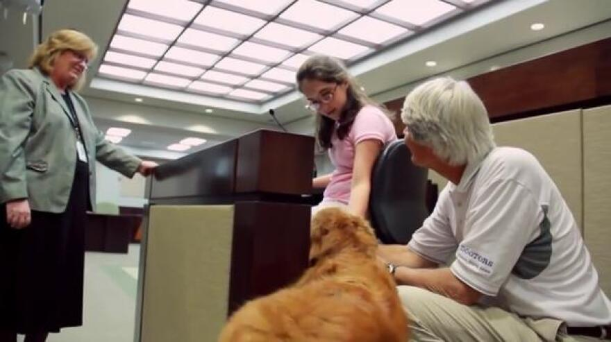 therapy_dogs_florida_courthouse_therapy_dogs_youtube.jpg