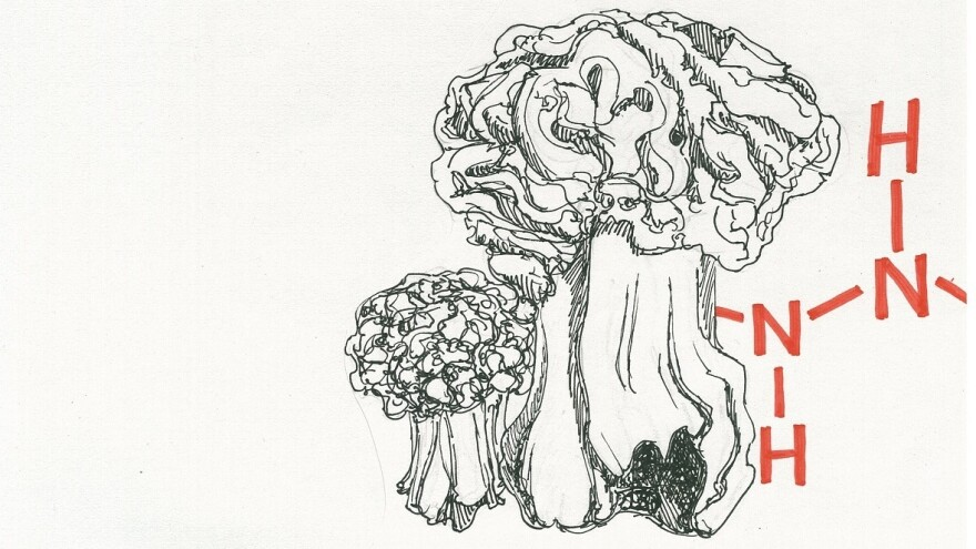 False morels contain monomethylhydrazine, a carcinogenic ingredient in rocket fuel.