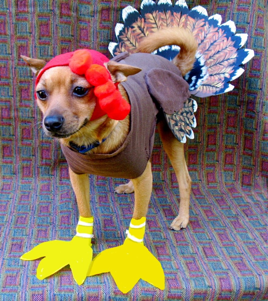 We don't endorse dressing your dog up for Thanksgiving.