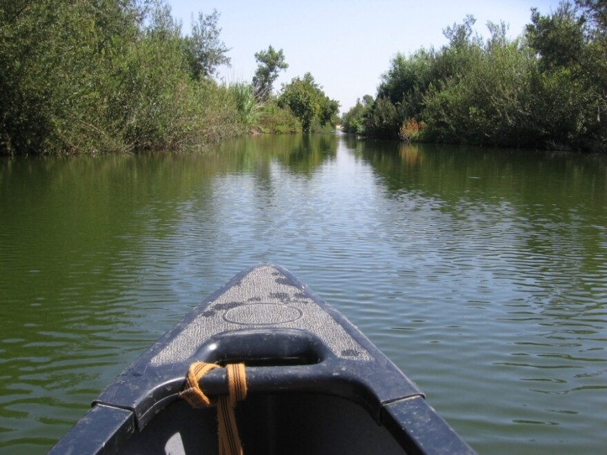 Los Angeles officials want the L.A. River to become a wildlife habitat.