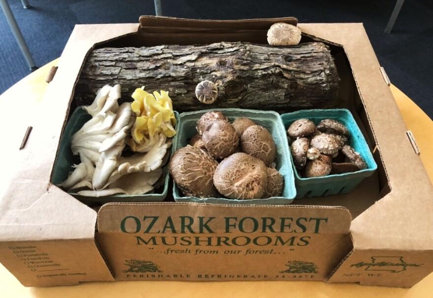 (May 20, 2019) Ozark Forest Mushroom specialties include oak log shiitakes mushrooms.