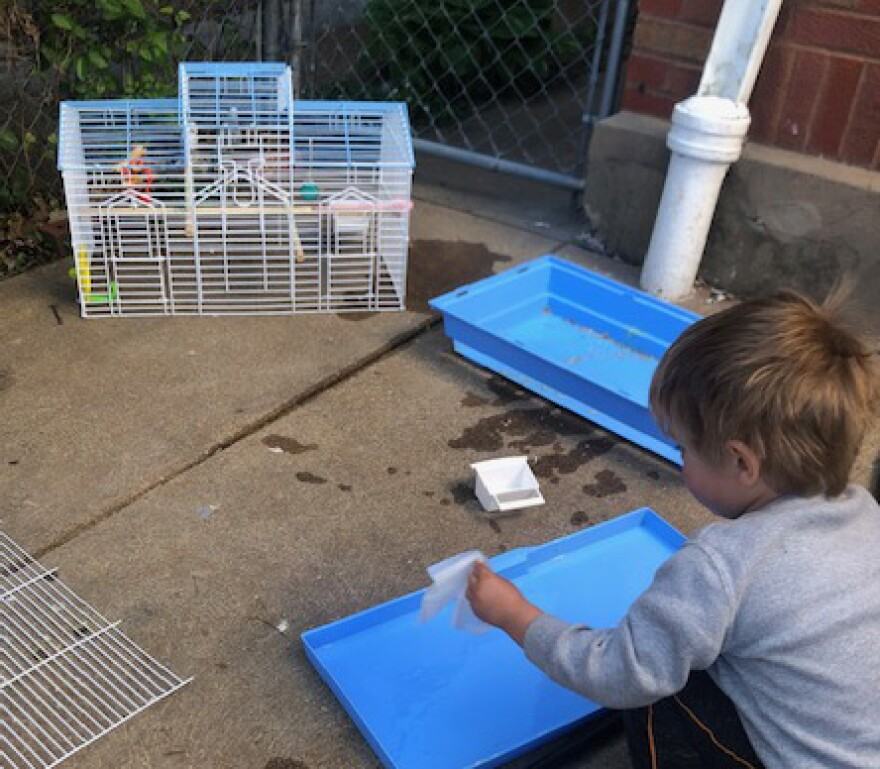 Three-year-old Auggie helps take care of school parakeets Copernicus and Galileo.