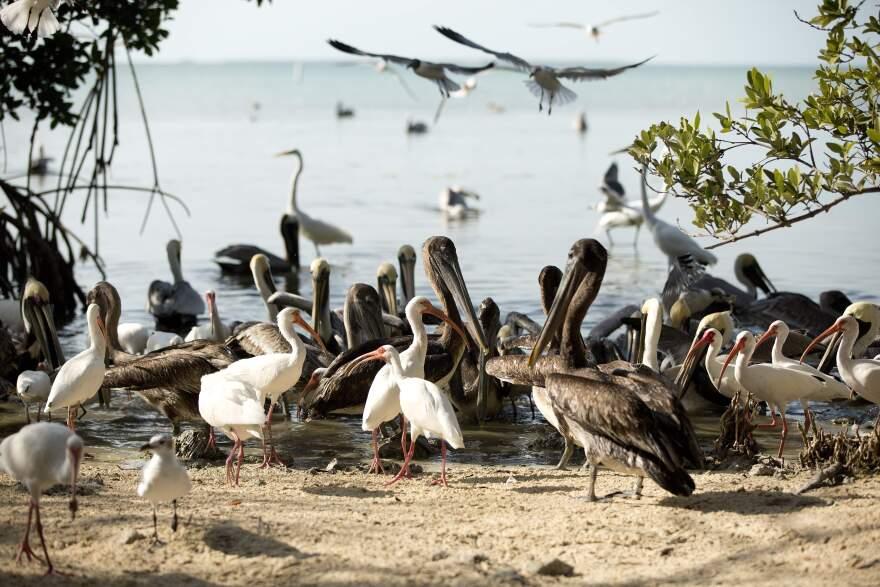 ap_birds.jpg