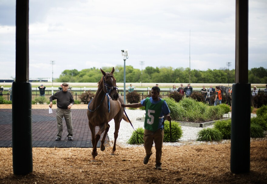 A horse is led to the paddock before a race.