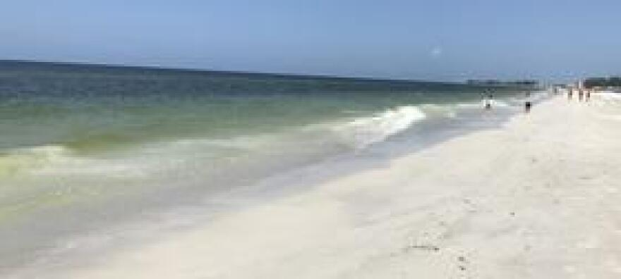 Manatee officials have been keeping beaches on Anna Maria Island mostly clear of dead fish, but beachgoers were still coughing from the toxic red tide bloom on Holmes Beach and Bradenton Beach on Wednesday, August 8.
